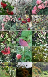autumn berries out&about in Brighton & Hove